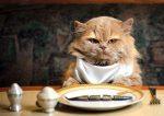 ¿Se le ha comido la lengua el gato del PSOE en Alcalá?