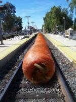 Crece una zanahoria gigante en las vías del Metro de Alcalá para vergüenza del PSOE